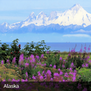 Picturesque Alaskan scene with mountains and flowers