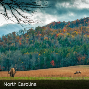 North Carolina hills in the autumn with elk grazing