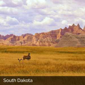South Dakota field with animals and mountains