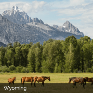 Wyoming field with horses and snow-capped mountains in the background